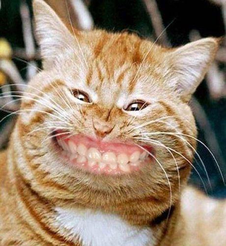 cat-smiling.jpg