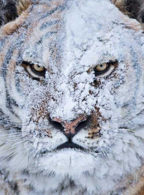 Hellcat Winter.jpg