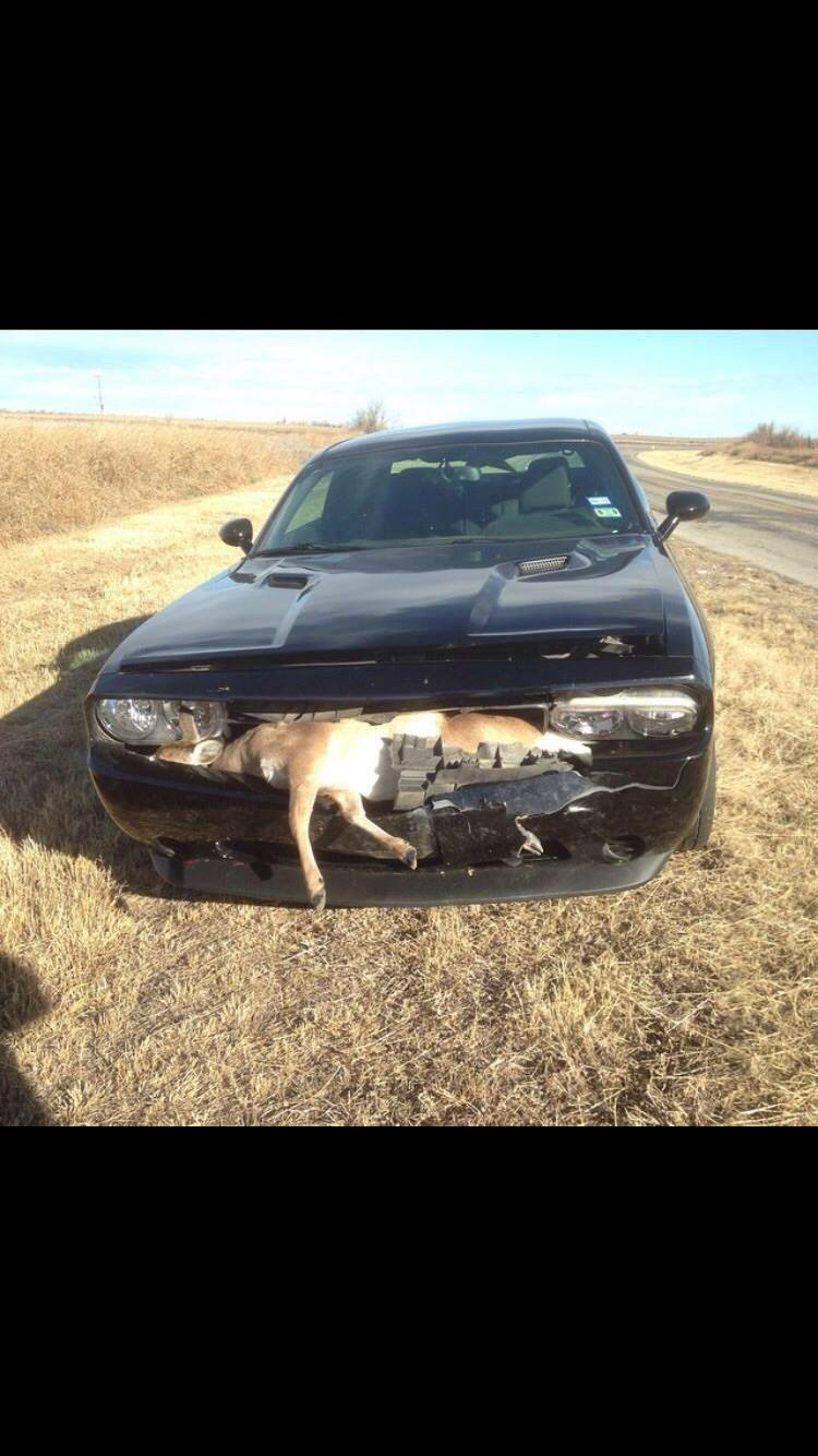 New World Record Dodge Challenger Srt Hellcat Wrecked After Just 18