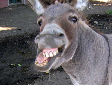 laughing-donkey.jpg