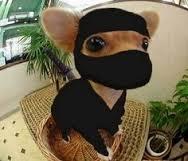 Ninja chiwewe.jpg