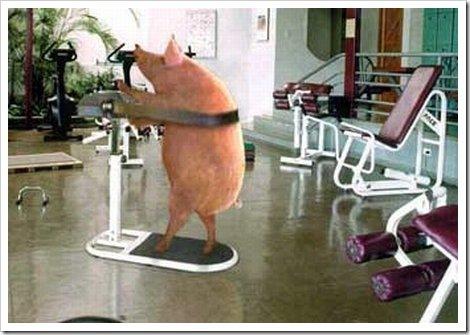 Pig losing wt.jpg