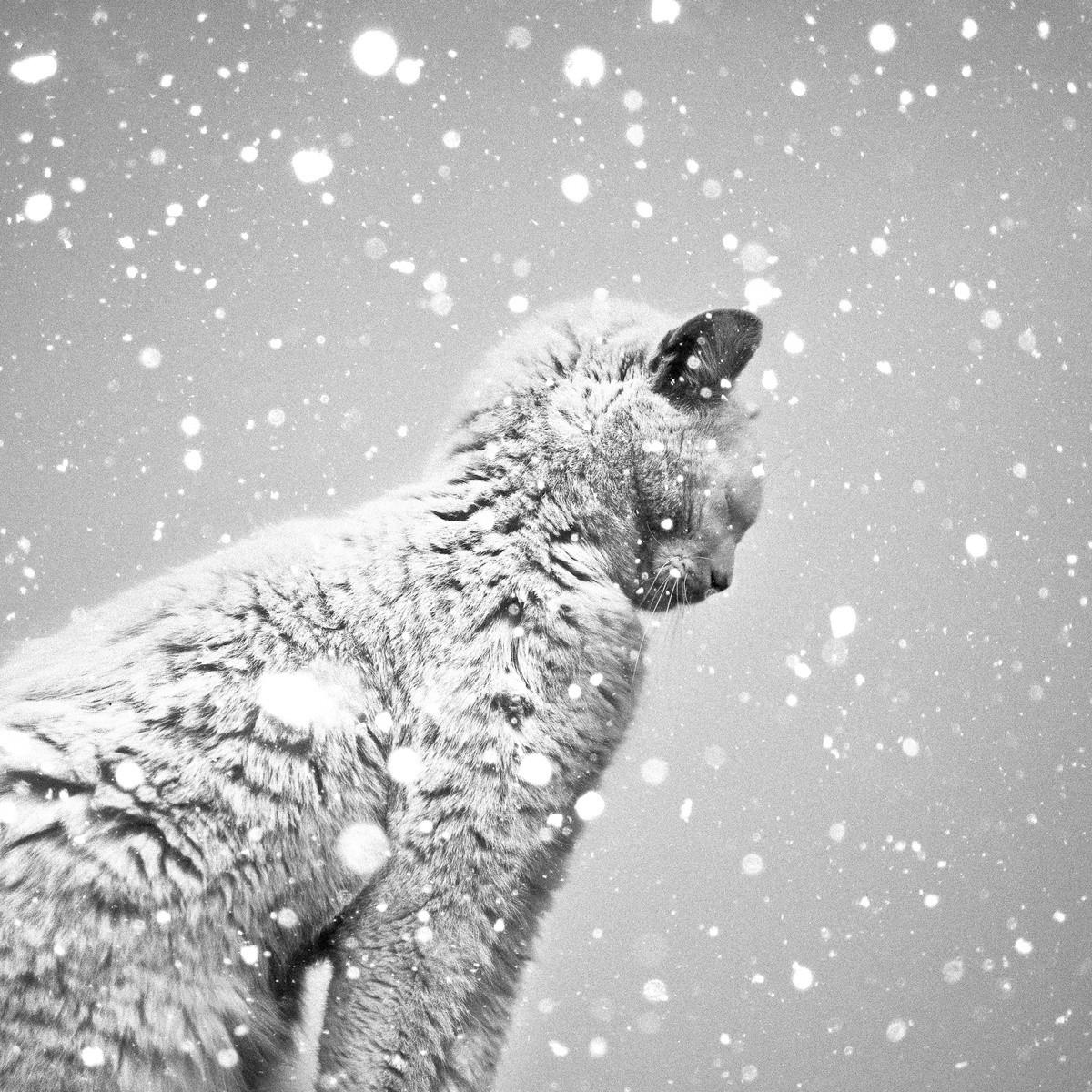 snow cat1.jpg