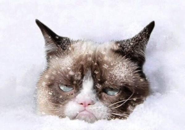 snow cat2.jpg