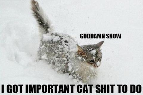 snow cat3.jpg